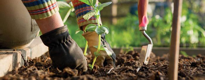 Prestation de jardinage